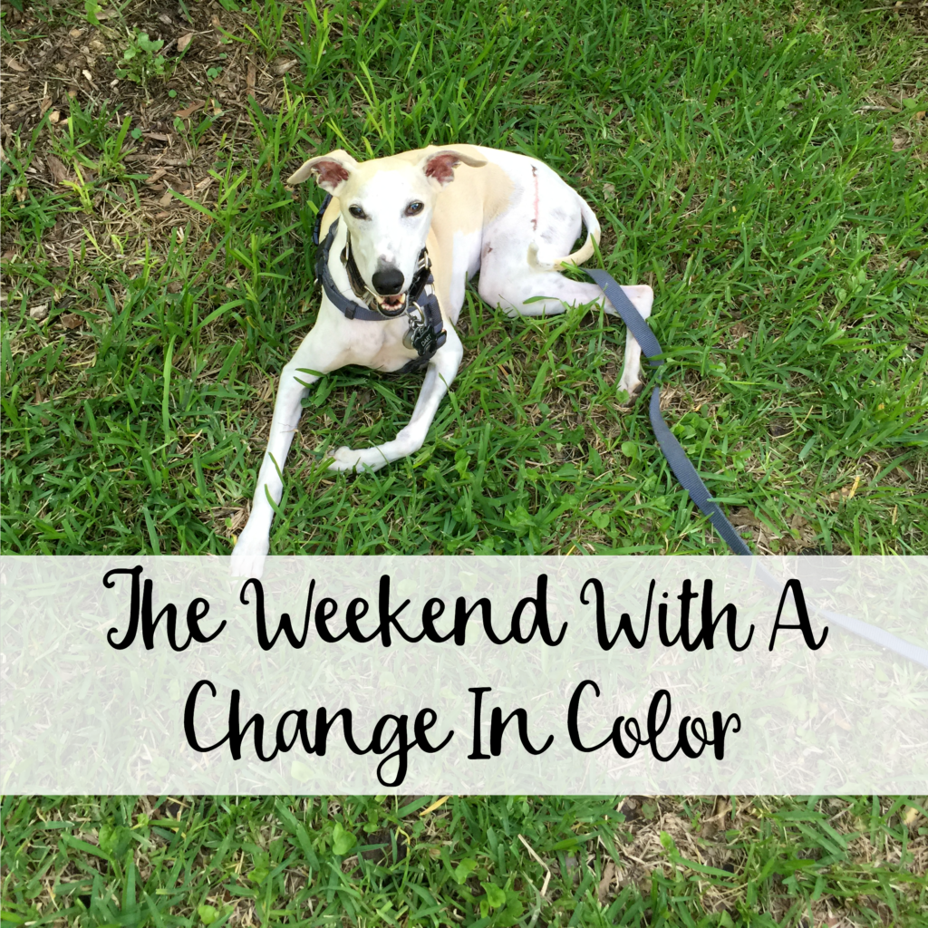 The Wandering Weekenders- The Weekend With A Change In Color