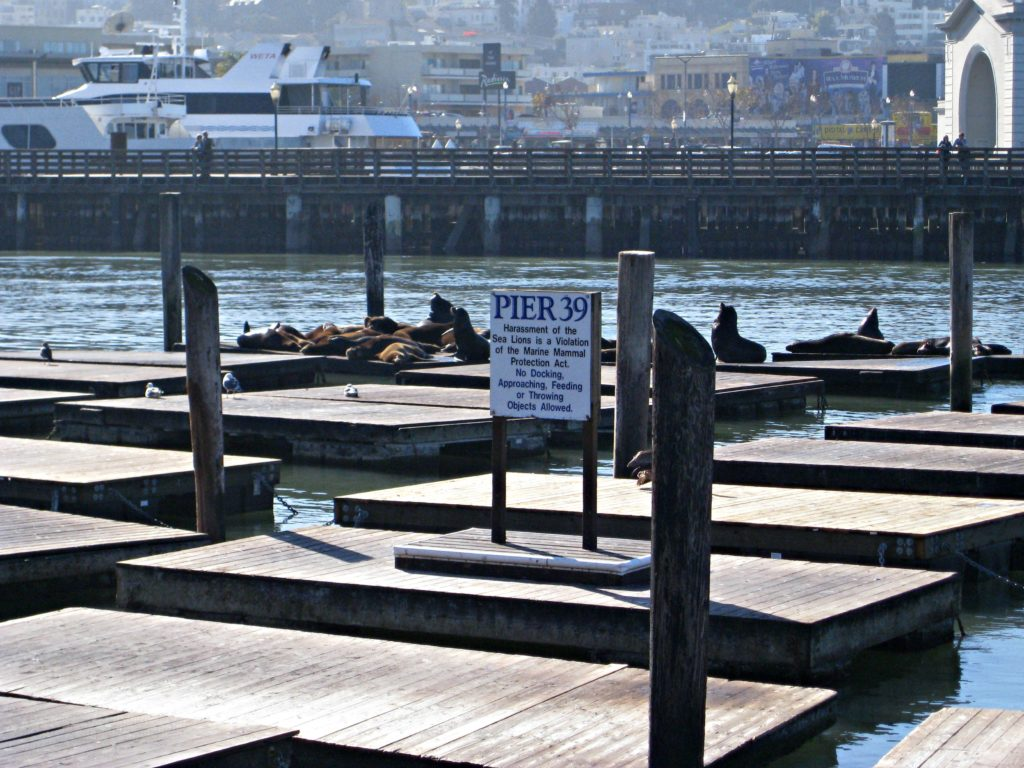 Things_To_Do_San_Francisco_Sea_Lions