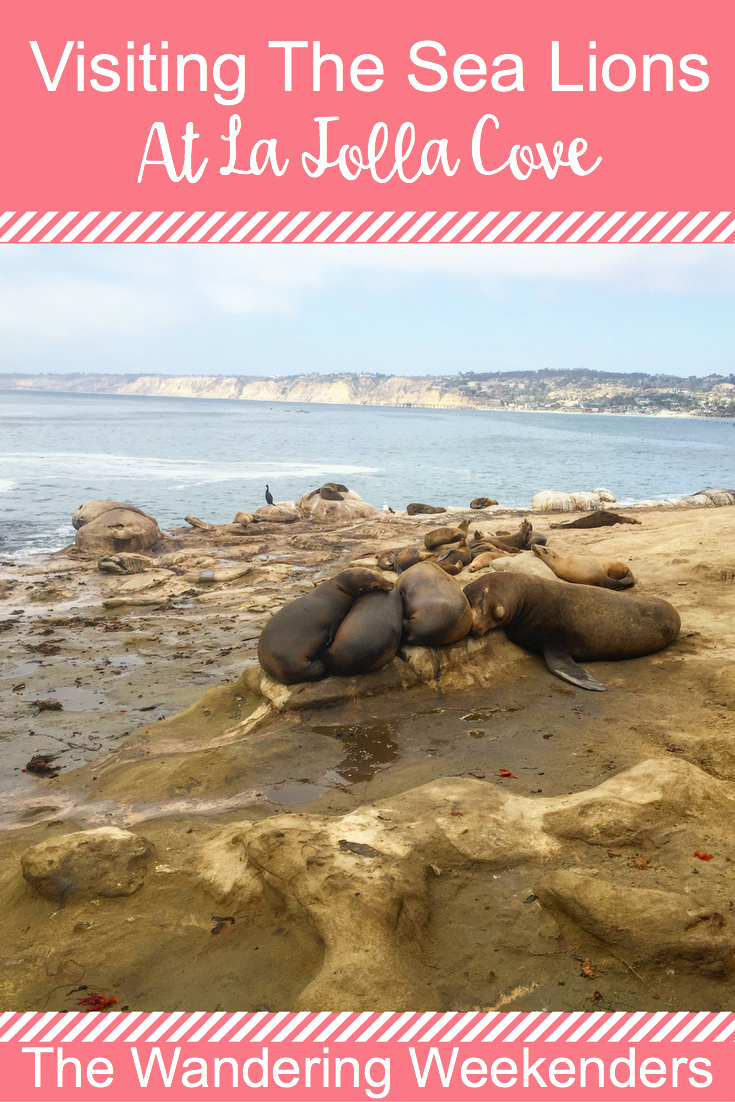 How to spend the perfect afternoon visiting the sea lions at La Jolla Cove in San Diego.