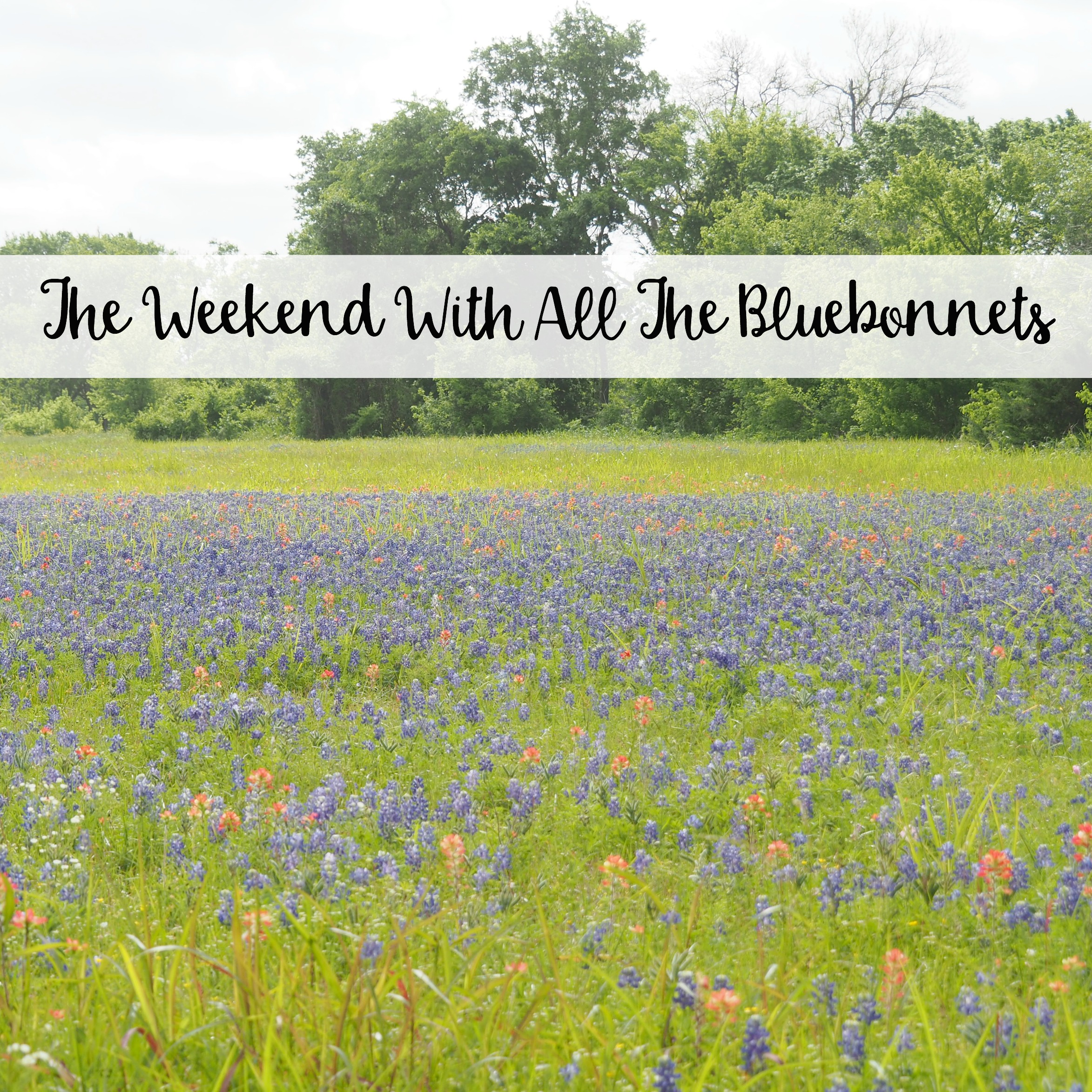 The Wandering Weekenders- The Weekend With All The Bluebonnets