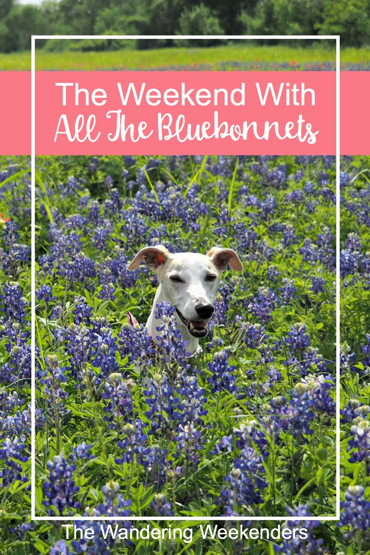 All about our low key weekend in search of bluebonnets. Bluebonnets are synonymous with spring in Texas and I'm so glad we found them!